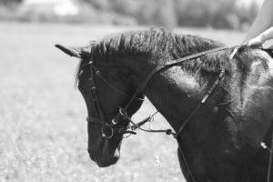 300x200 - Наши лошадки