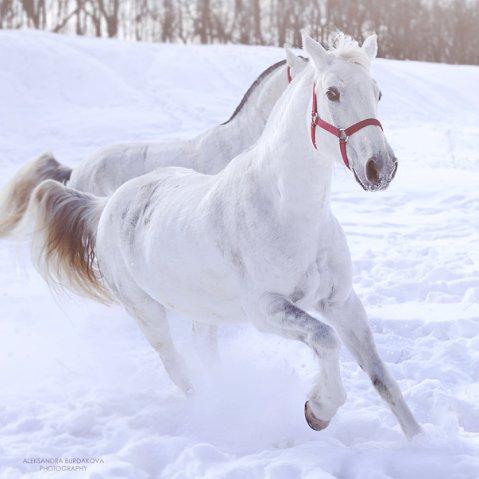 Зимние верховые прогулки в ЧК «Хлебниково»