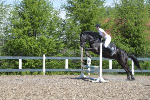 3IOXbimPZz0 300x200 - Нам часто задают вопрос: какие породы лошадей чаще всего используются для верховых прогулок и почему?