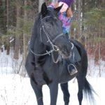 Q WIU6I83b4 150x150 - Нам часто задают вопрос: какие породы лошадей чаще всего используются для верховых прогулок и почему?