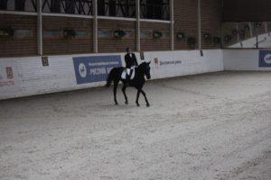 aUJDxebCx9A 300x200 - Нам часто задают вопрос: какие породы лошадей чаще всего используются для верховых прогулок и почему?