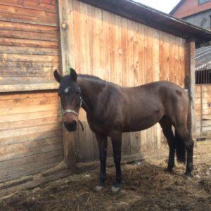 rgFHiaSAFUY 300x300 - Весенние стрижки лошадок