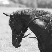 конный прокат хлебниково
