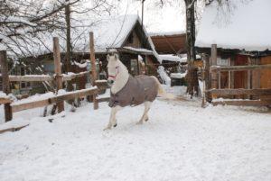 lxU66gOmzfw 300x201 - Снежная лошадь