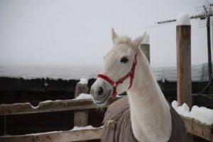 mgYTDxo89CI 300x201 - Снежная лошадь