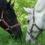 Лошади на пастбище!