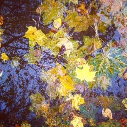 Друзья! Не смотря на непогоду,приезжайте прокатиться по осеннему лесу🏇, послушать шорох листвы под ногами лошадей и  насладиться последними красками уходящей осени!!!