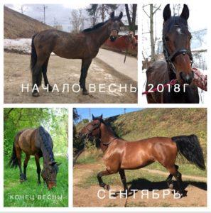 n2l0yskxBFs 297x300 - Как меняются лошадки