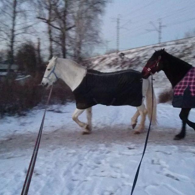 Лень лошадок по одной гонять  Пепел & Фижма
