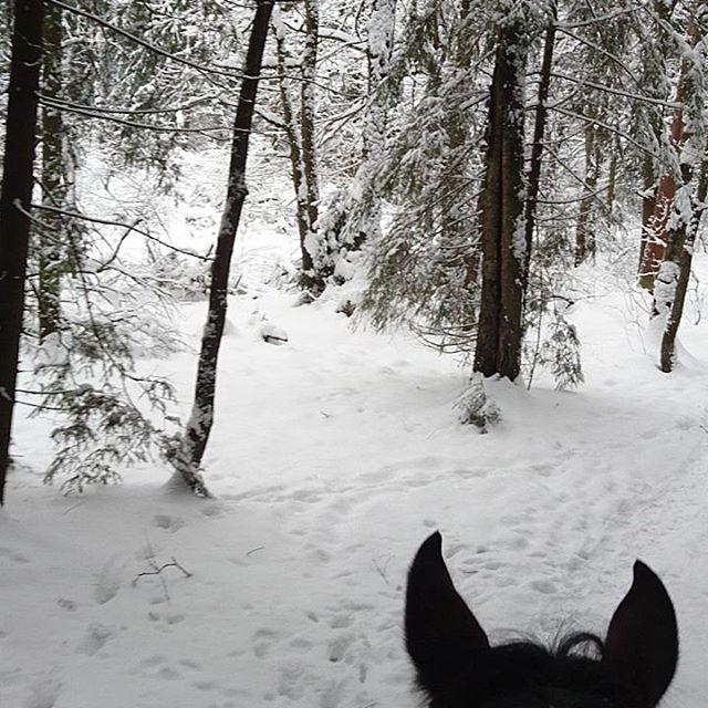 Наша снежная зима ️☃️🏇