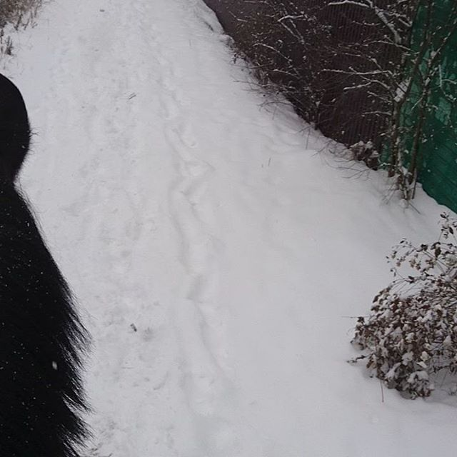 Настоящая снежная зима 🌨️☃️ Женя отжигает 🏇