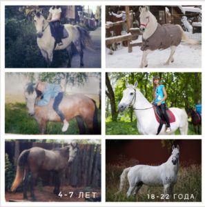 sXGP2GPxAhU 297x300 - Как меняются лошади 🐎